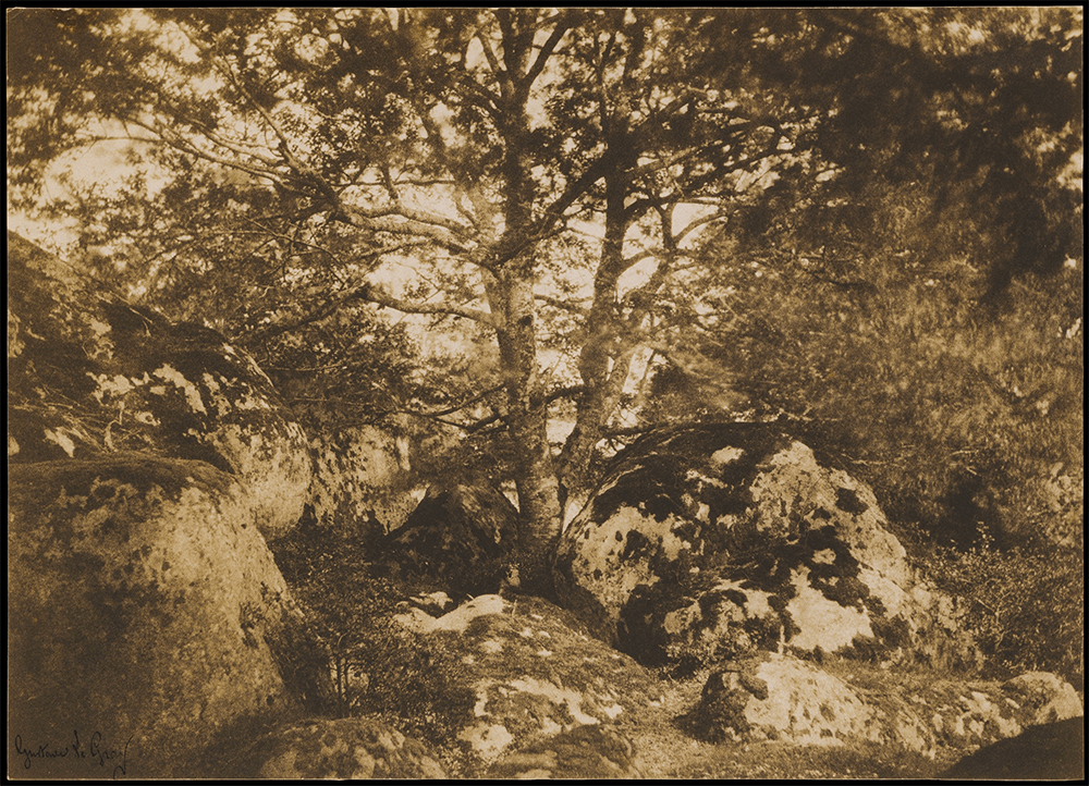 Oak Tree and Rocks, Forest of Fontainebleau